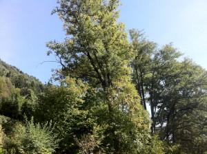 Totholzentfernung