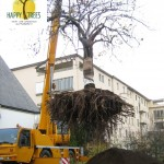 Grossbaumverpflanzung 6.5t