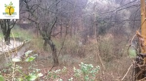 Ein verwildertes Grundstück-Vorher.