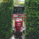Wurzelstock fäsen enges Gartentor